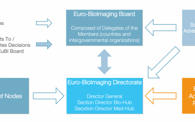 EBIB embedded into the governance structure of Euro-BioImaging